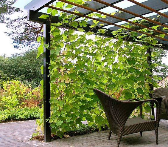 a modern living wall that comes up to the roof to make the space more private and welcoming