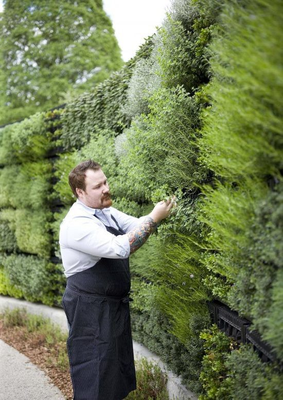 a vertical herb garden for privacy, a wonderful smell and is a must for home cooks