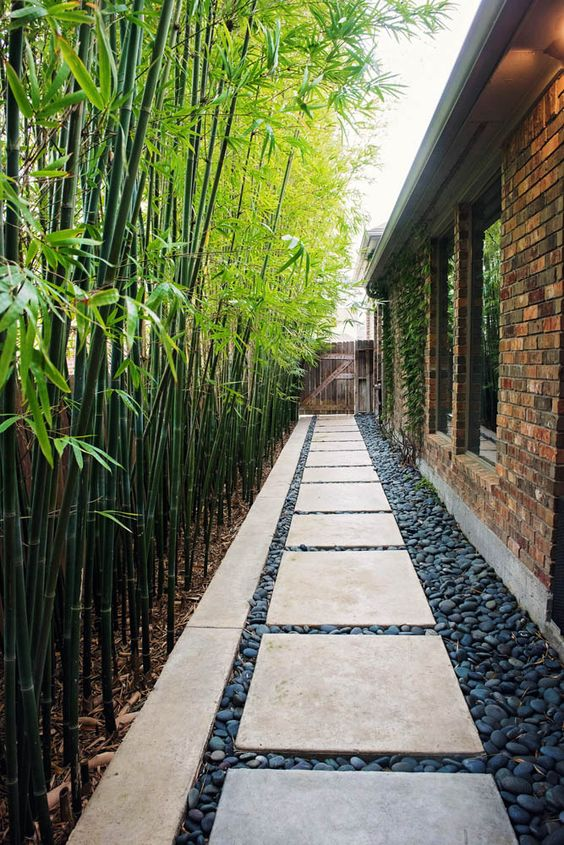 lush and tall bamboo is a perfect idea for an outdoor space in the south or in a tropical zone