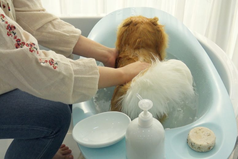 I bet this bathtub will be also suitable for cats, wash your pet with comfort anytime