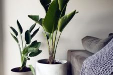 22 large potted plants will instantly bring a wow factor to any space