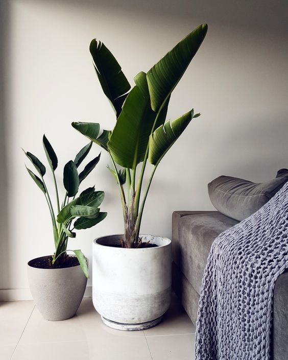 large potted plants will instantly bring a wow factor to any space