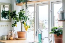 24 rock potted herbs in the kitchen to be able to use these herbs for cooking
