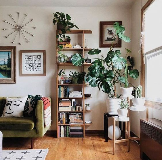 go for statement plants like cacti, succulents and even palms to add style to your space