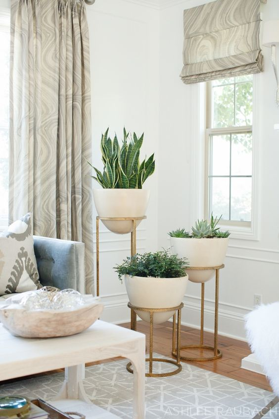 arrange your home plants in the same pots to keep the style unified