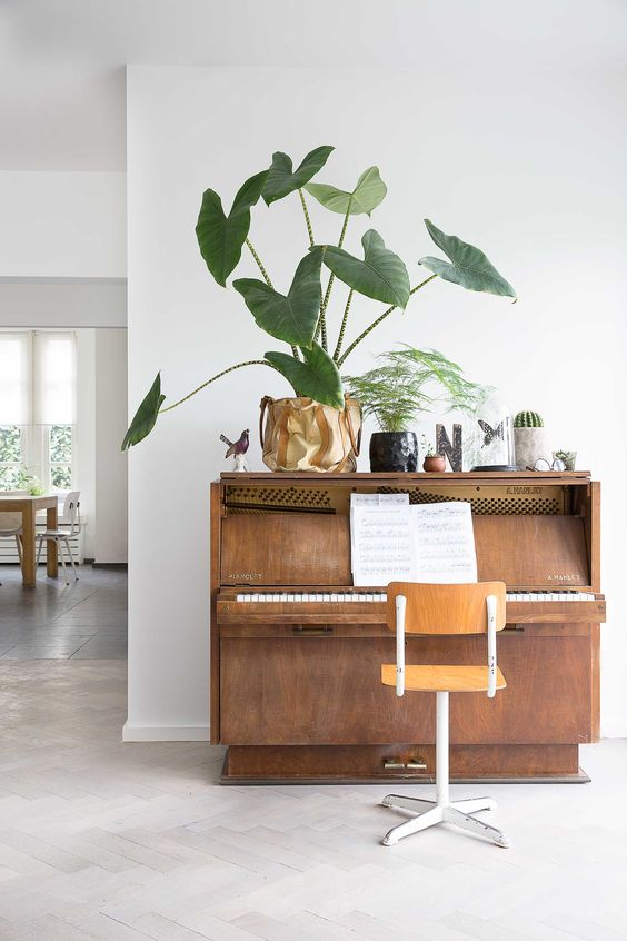a piano with a chair and a display of cacti, succulents and other greenery - make your piano double as a plant stand