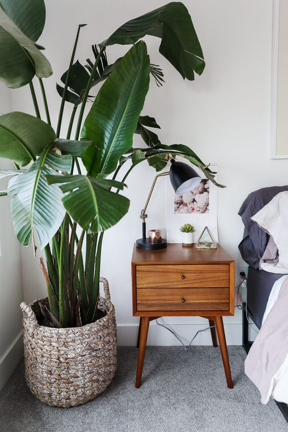 a basket covering a planter is a cool idea that adds coziness