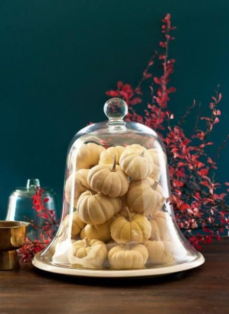 a cloche filled with mini white pumpkins is a great last minute decoration for fall and Thanksgiving parties that looks very natural