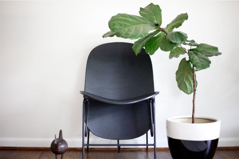 The Fig chair is the first piece of Fig collection that looks comfy and modern