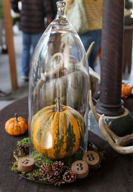 a cloche with moss, pinecones, wood numbers and a real pumpkin inside for a woodland or rustic feel in your space