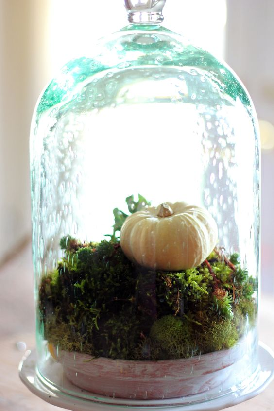 a cool blue cloche with a bowl filled with moss and a fake pumpkin for a fresh touch on your table or mantel