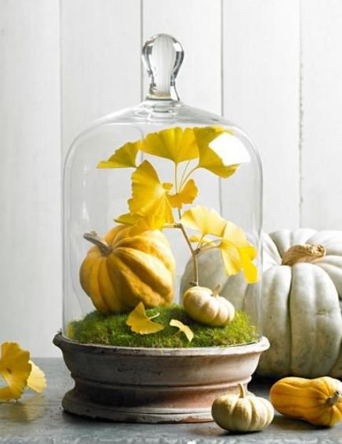 a chic fall cloche with moss, fake pumpkins and yellow leaves for a fall or a Thanksgiving mantel or table