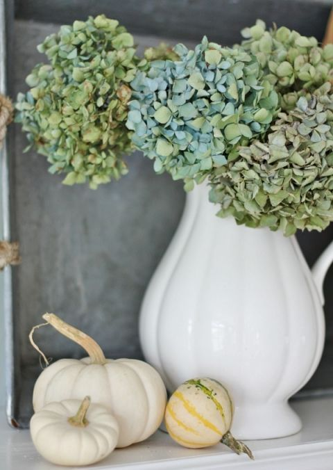 a vintage white pitcher with green hydrangeas and pumpkins around is a great decoration or a centerpiece
