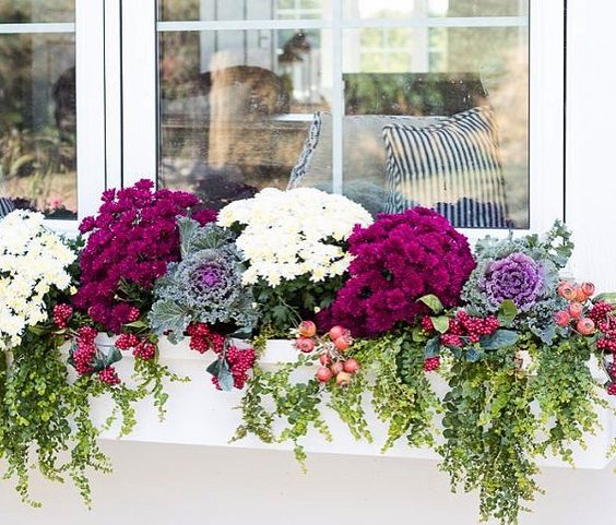 a white window box planter with burgundy and white blooms, foliage, cabbages, berries