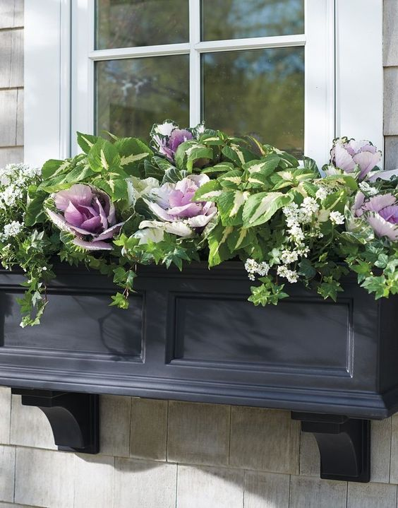 a traditional black window planter with much greenery and foliage and purple cabbage for a touch of color
