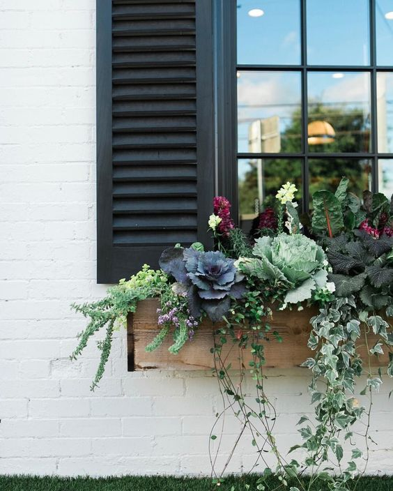 a rustic wooden window box planter with cabbages, blooms, foliage and little flowers looks cool