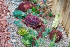 02 succulents come in many various colors, from various shades of green to burgundy and grey