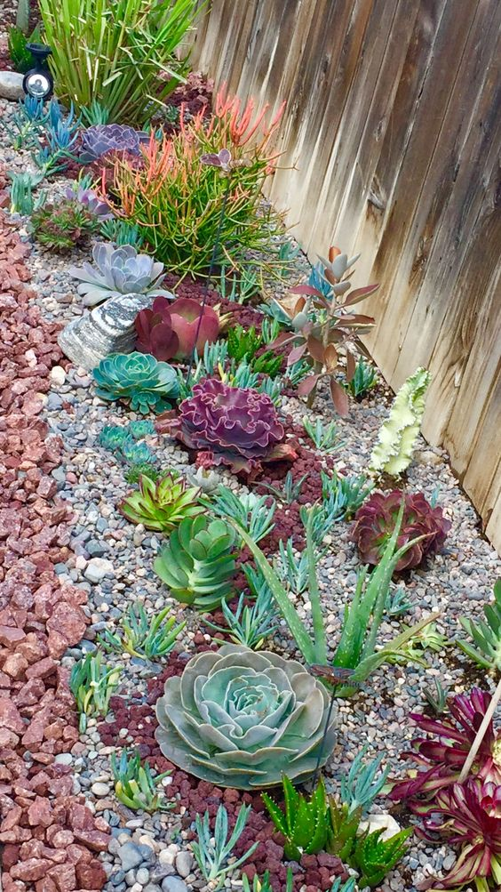 succulents come in many various colors, from various shades of green to burgundy and grey