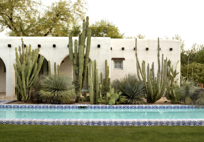 cacti are super natural for a desert garden and such tall post cacti will easily substitute any trees