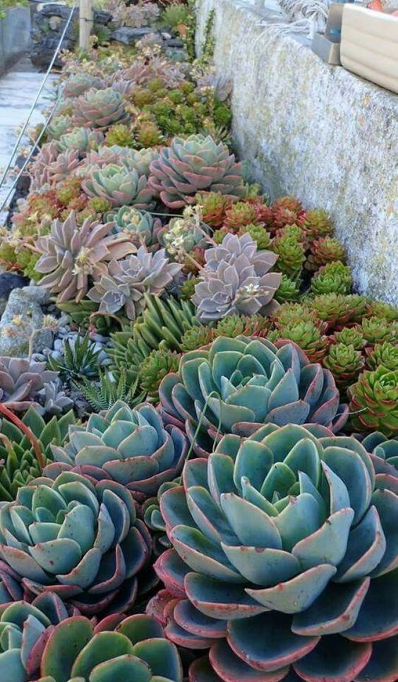 combine different types and colors of succulents and pair larger with smaller ones