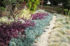 03 covering the ground with pale succulents and simple grasses create a living tapestry in the front yard