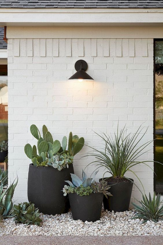 matte black planters with different cacti, succulents and grass plus a light over them is a stylish modern idea