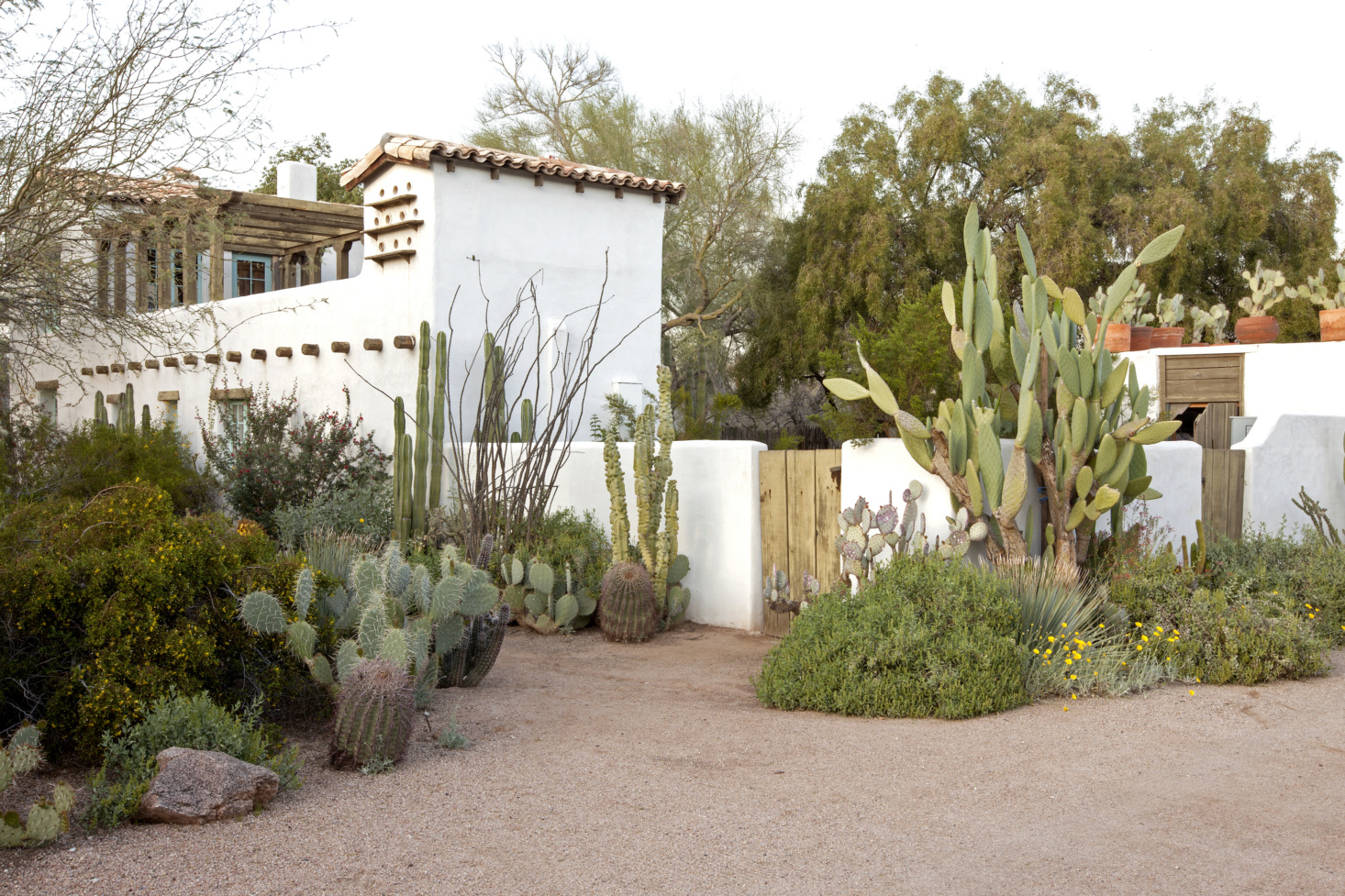 large cacti can be combined with smaller ones, just choose different types and different looks