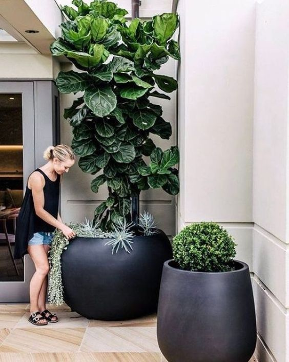 oversized matte black planters with boxwood, succulents and a tree for a modern feel in your front yard