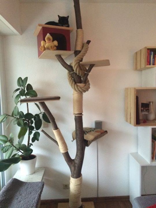 a classic cat tree of branches and trunks, with rope and yarn and even a box to hide inside