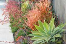 05 a gorgeous low water garden with various types of grasses, agaves and succulents