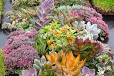 05 succulents may be very eye-catching and even show-stopping, in various shades and sizes