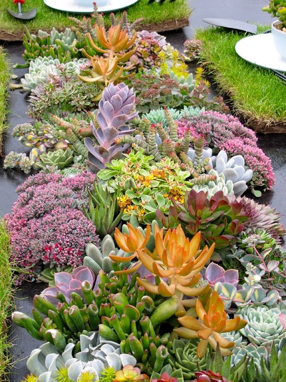 succulents may be very eye catching and even show stopping, in various shades and sizes