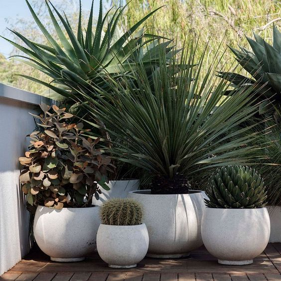 large matching white planters with different statement plants is a chic and bold idea for a modern front yard