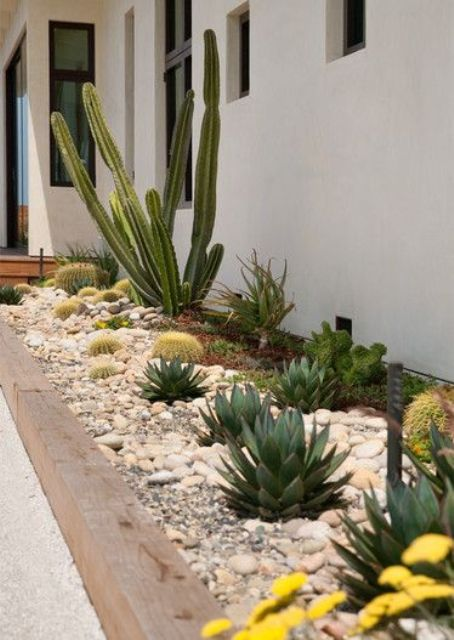 combine cacti with smaller ones and succulents to create a catchier and bolder look