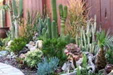 07 even if you pair succulents with cacti, you should properly water the succulents accodring to the species you have