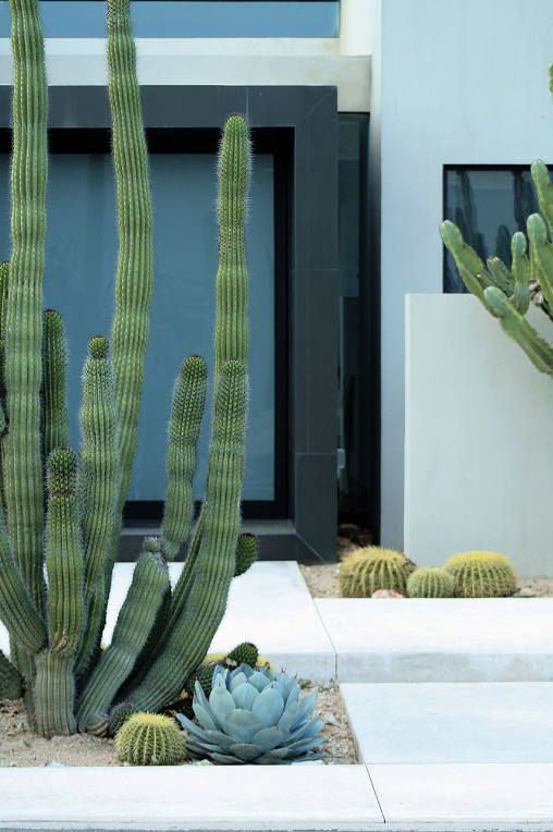 large post cacti and some smaller ones plus pale succulents for a bold contemporary look