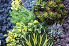 08 succulents may grow in drought but you'll need towater them properly anyway