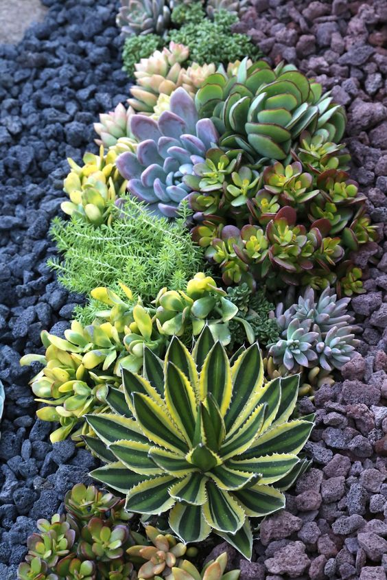 succulents may grow in drought but you'll need towater them properly anyway