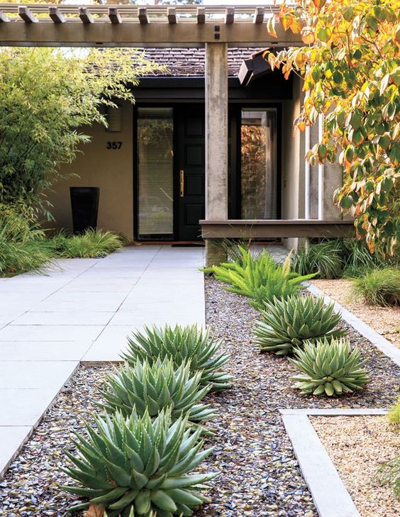 aloe polyphylla and asparagus ferns mixed up with pebbles for a chic and modern front yard