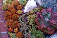 09 colorful succulents in orange, green, purple and grey combined with some rocks for a cool look