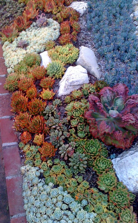 colorful succulents in orange, green, purple and grey combined with some rocks for a cool look