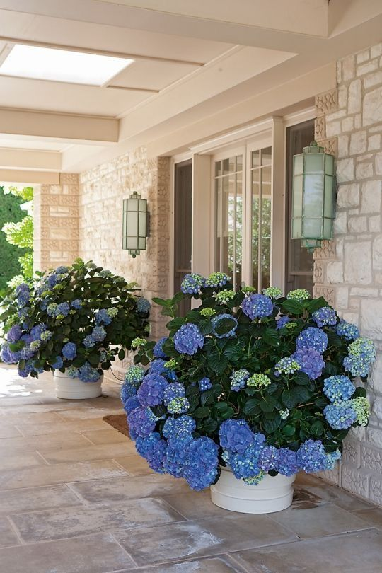 white planters with super lush and colorful blooms catch an eye and lamps over them will accent them even more