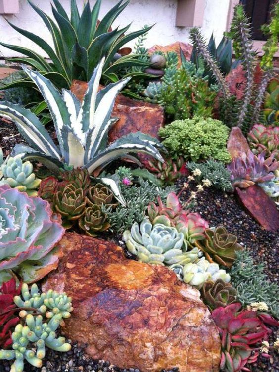 go for large agaves as show stoppers, add smaller succulents in various colors and textures