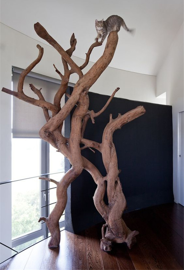 a real cat tree of various branches and trunks will add a natural touch to the space and teach your cats to climb