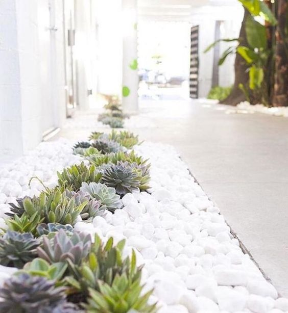 little succulents paired with white pebbles make the front yard neutral, minimalist and very trendy