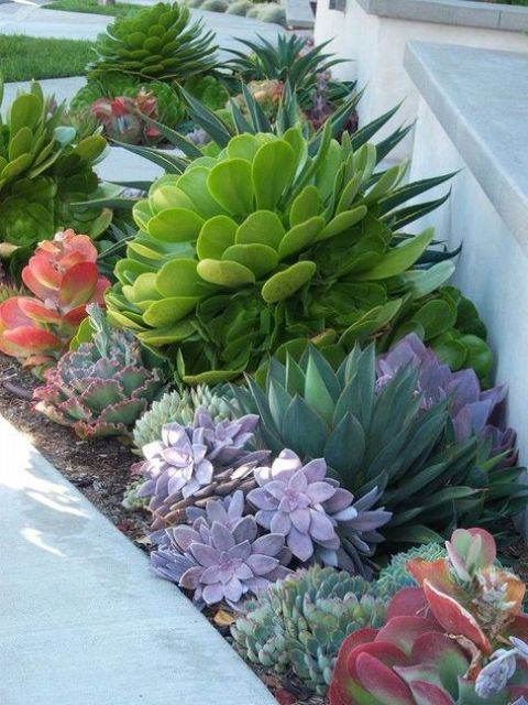 make a statement with a large succulent in some bold color, like here   a bold green one accented with purple succulents