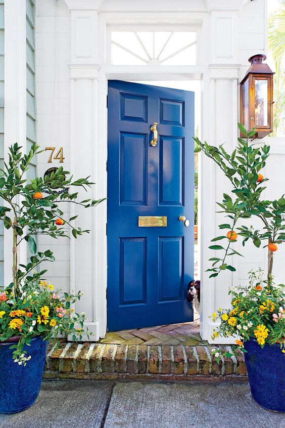 a cobalt blue door and matching planters with bright blooms and citrus trees for a Mediterranean feel