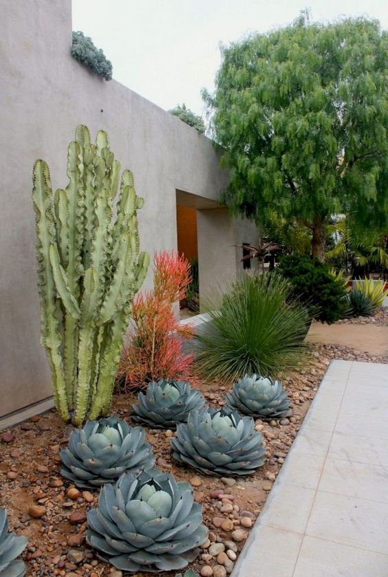large succulents, cacti and a couple of colorful statement plants plus brown pebbles for a contrasting and bold look