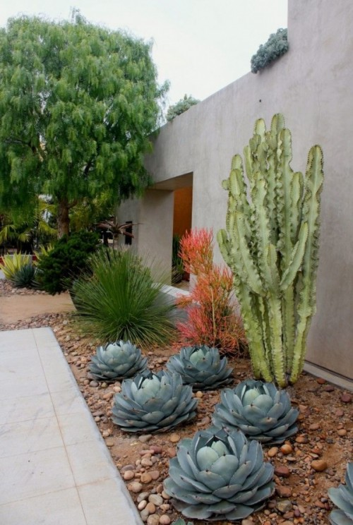 a large post cactusis combined with large round succulents and agaves around