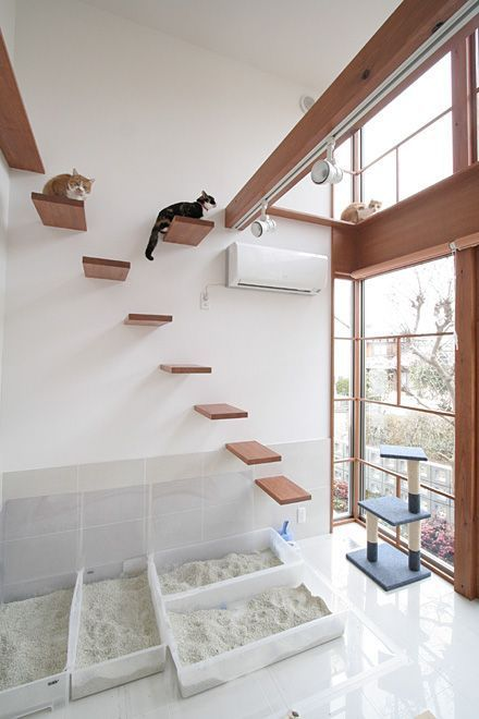 a minimalist cat climber with several platforms, a cat scratcher and several litter boxes for kitties